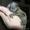 карликовый мартышка #1202224